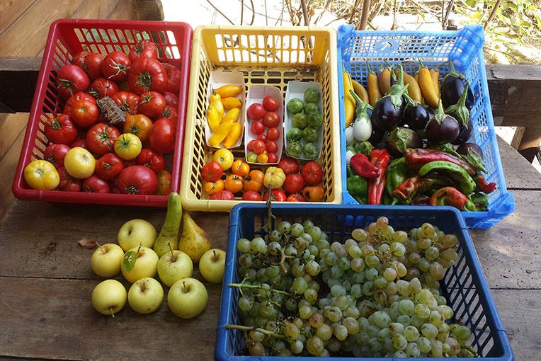 fruits-corse-u-pignottu
